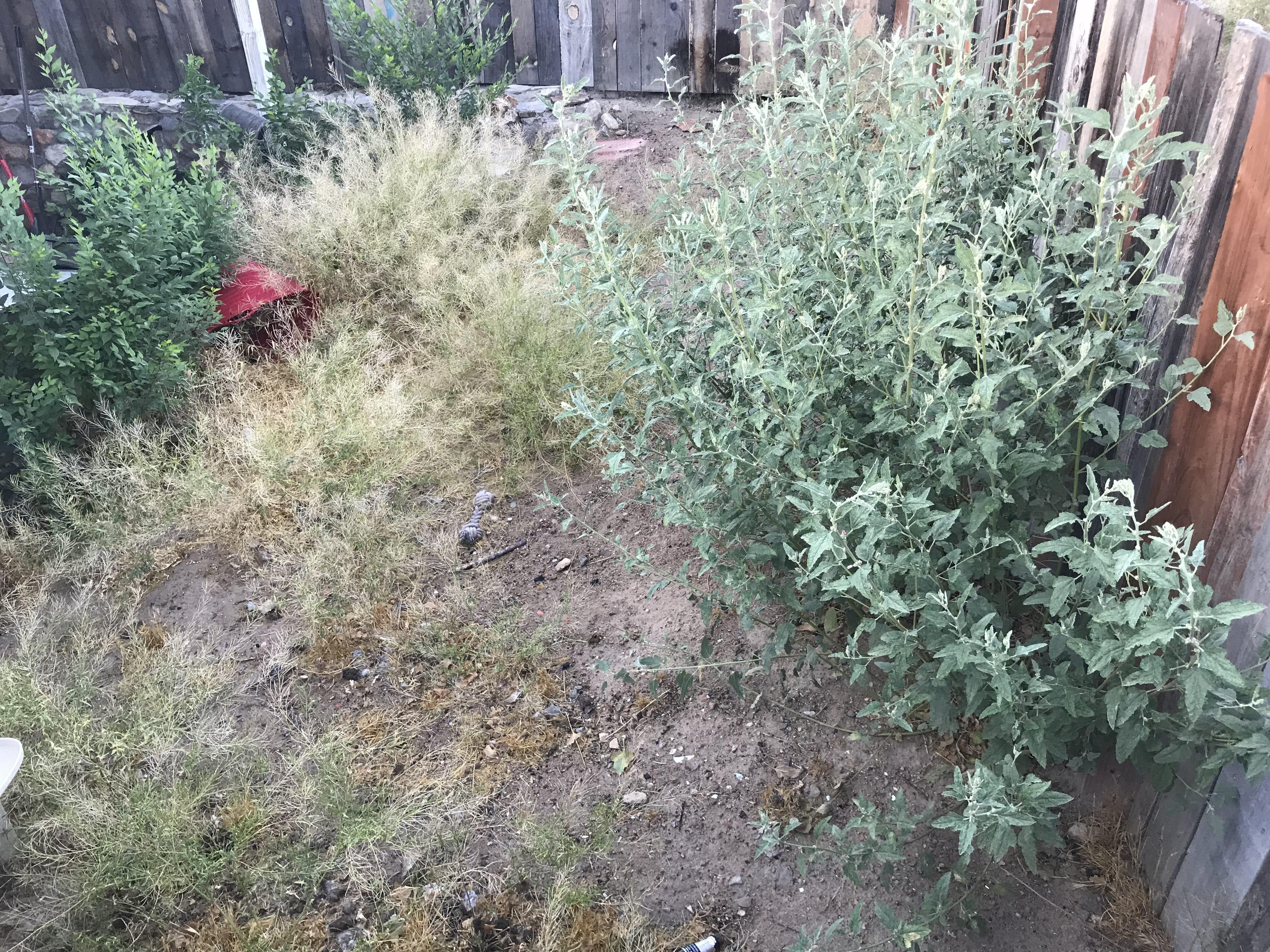 Before-Back-Patio-Garden